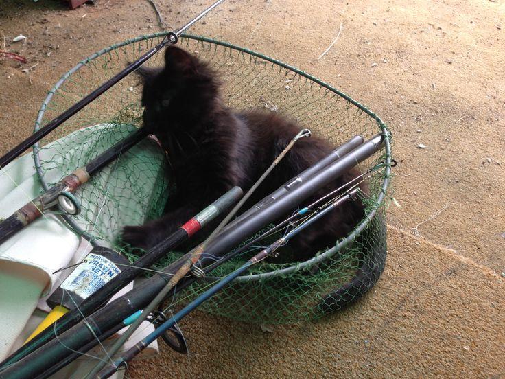 Kale dreams of fishing