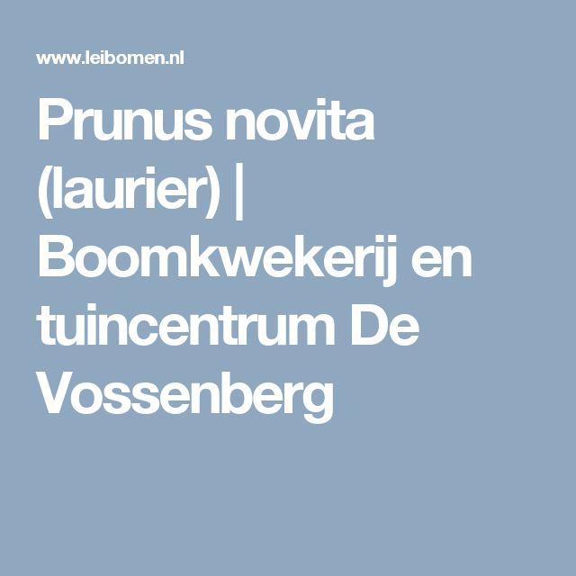 Prunus novita (laurier) | Boomkwekerij en tuincentrum De Vossenberg