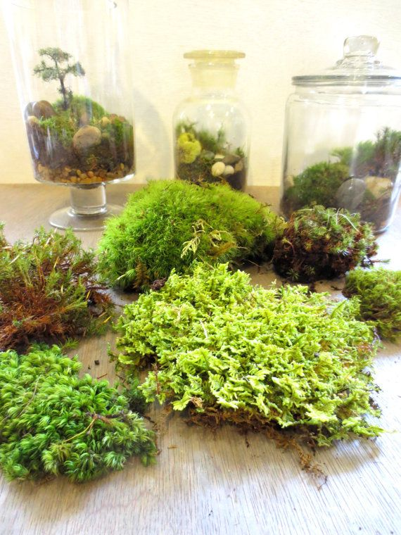 Gimme Some Green....Moss Terrarium Contents DIY by FaerieNest, $9.50