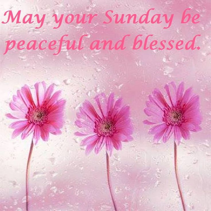 83 best images about Happy Sunday..°°*†*°° on ...