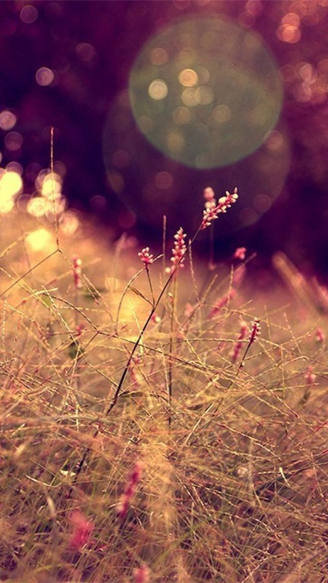 ... Nature Blurred Bokeh Warm Multicolored Flowers HD iPhone 5 Wallpaper