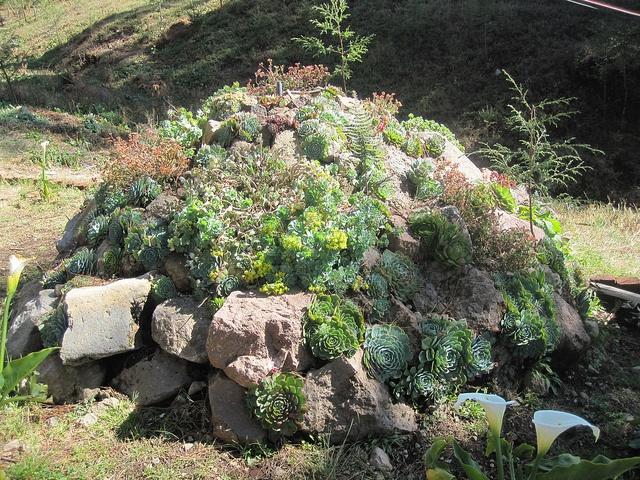 Best 25 succulent rock garden ideas on pinterest for Succulent rock garden ideas