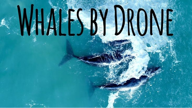 Dramatic Drone Footage of Whales in Hermanus, South Africa
