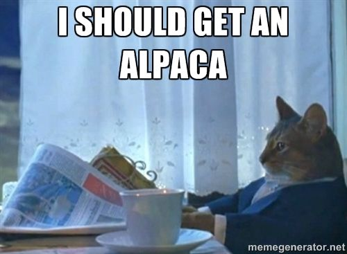 51900de01693e3a8195d761e8e1fb9c7 cat memes funny memes best 25 cat meme generator ideas on pinterest grumpy cat meme,Alpaca Meme Generator