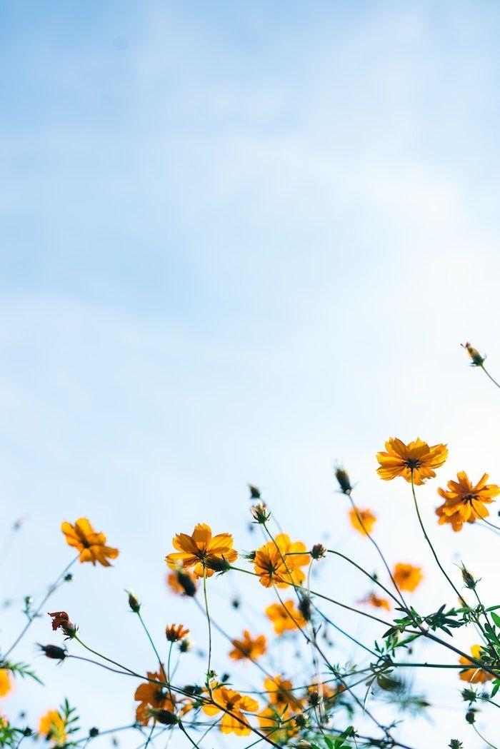 1001 + photos de paysage de printemps pour célébrer le