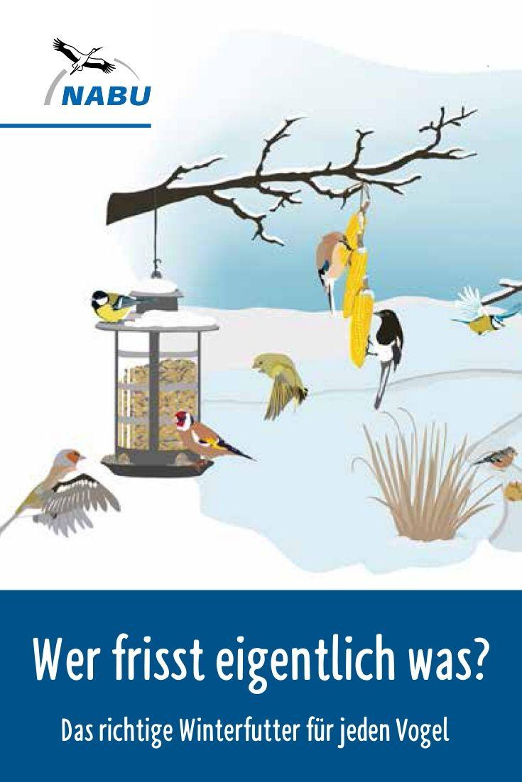 Pin Auf Vogeln Helfen