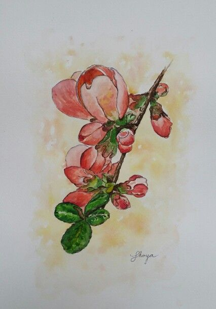 Japonica Watercolour painting by Shoya 30x40 cm