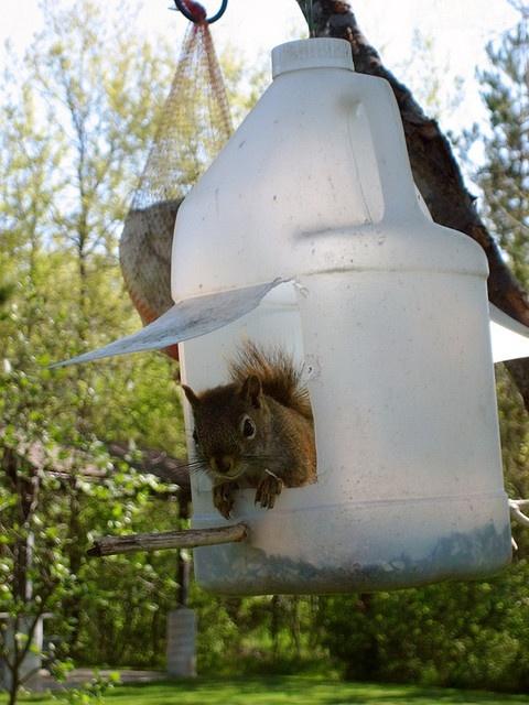 Diy Squirrel Feeder Squirrel Feeder Squirrel Feeder Diy