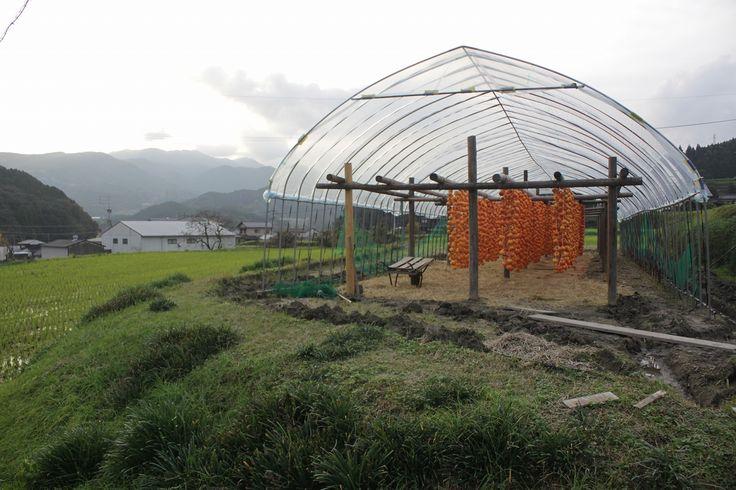 つるし柿の里~佐賀市大和町松梅地区 Village of dried persimmons @Yamato-cho -Saga city
