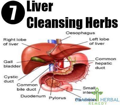 81 best liver cleanse images on pinterest liver cleanse liver liver cleanse herbs ccuart Gallery