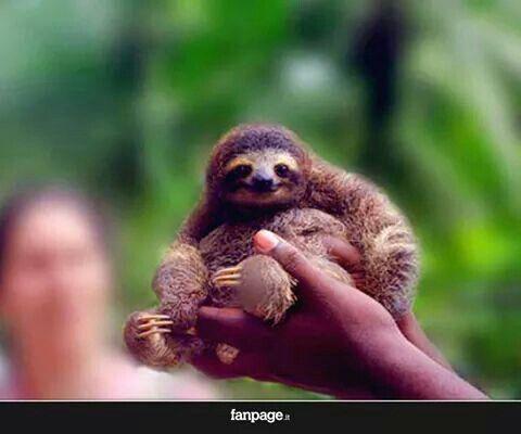 Cucciolo di bradipo ;)