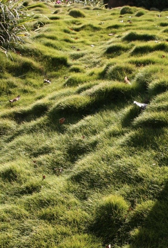 Zoysia Grass Groundcover Landscaping Zoysia Grass