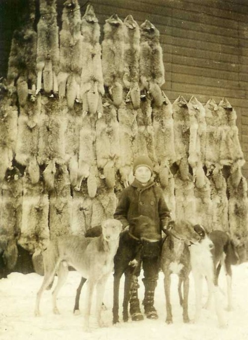 Coyote lurchers.  Whoa.