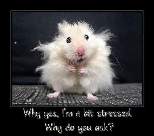 hehe  ...sometimes i feel as though i actually look like this little critter. He's cute, right?? ha!