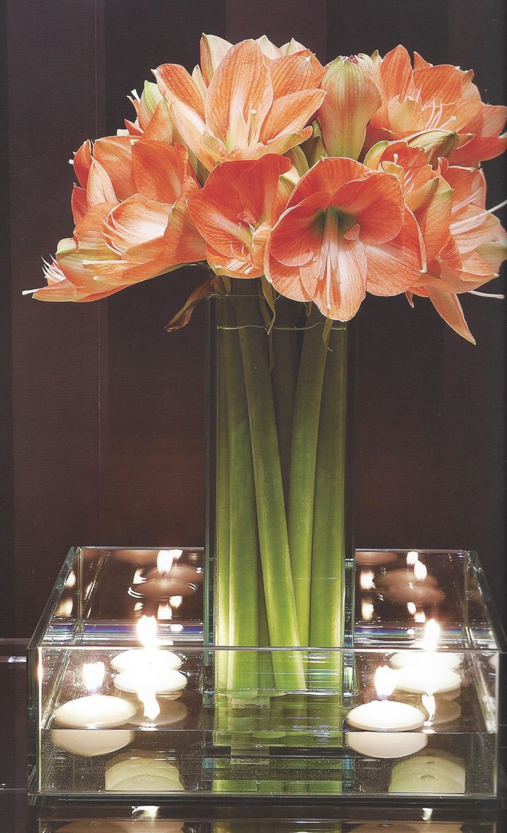 this could be a striking centerpieces option with white amaryllis at the center and floating blue flowers at the base with the candles