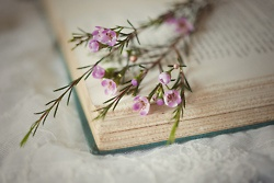 <3: Photos, Books, Vintage Book, Lovely, Things, Book Flowers, Garden, Pretty