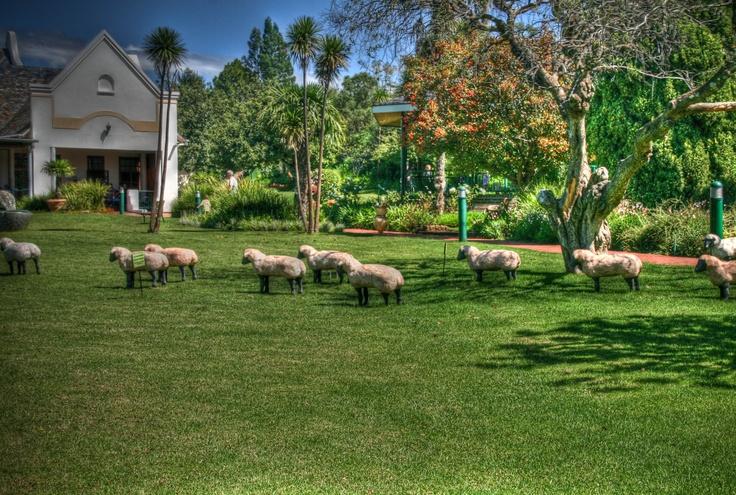 Oliewenhuis tuine, Bloemfontein