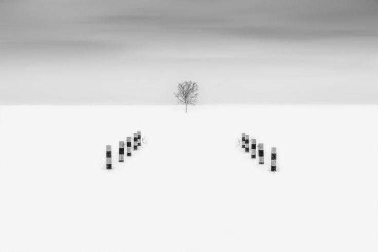 The tree by Maratti Z