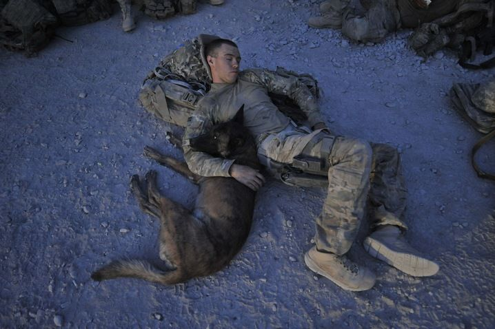 Military dogs and their handlers have a special relationship