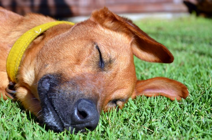 Fake Grass For Dogs: Pet-Friendly Artificial Turf Your Dog Will LOVE!