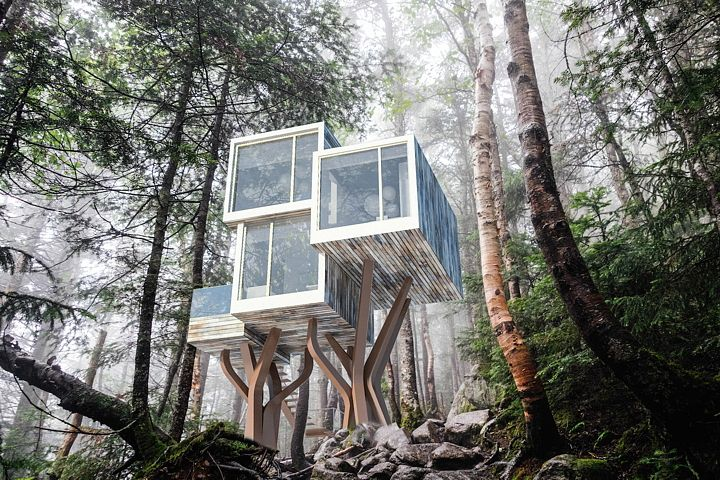 NewNest, the treehouse reloaded