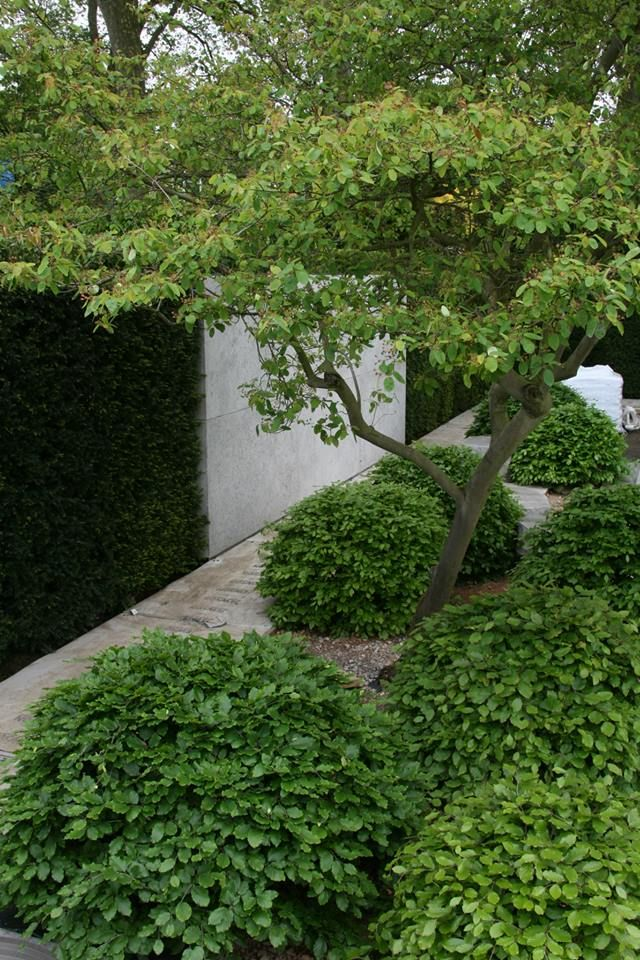 Chelsea Flower Show 2014 – love the hedge wall combination+carpinus betulus…