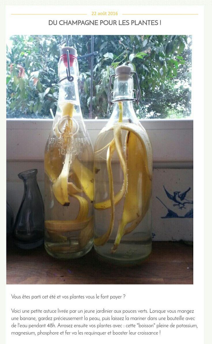 Engrais liquide à base d'eau et de peau de banane