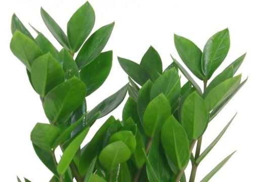 indoor growing tips troubleshooting problems with house plants - Identifying House Plants By Leaves