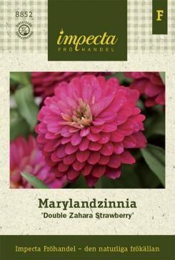 Marylandzinnia | Zinnia marylandica | 'Double Zahara Strawberry'