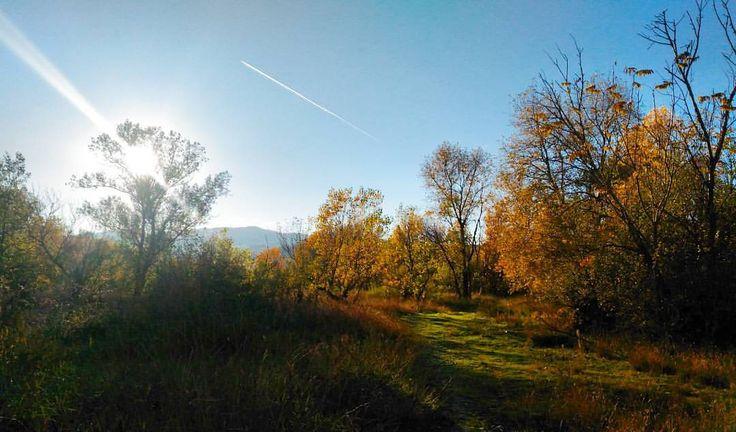This is where I belong 🍁🌳. #riverside #nature #sky #sunnydays #latergram #sunday #walk #trees #valtrebbia #autumn #fall #yellowleaves #winteriscoming