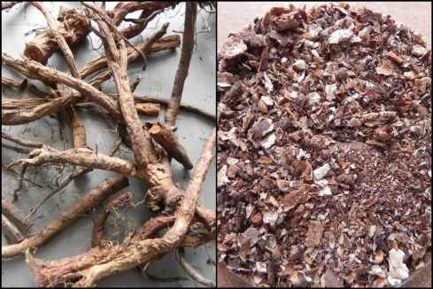 Dandelion Root Coffee How To