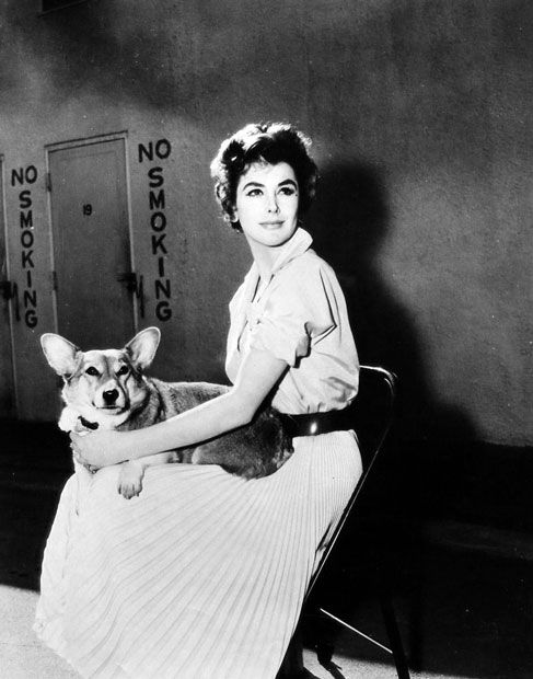 Kay Kendall enjoys her dog's company between scenes of Les Girls