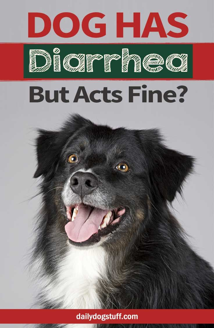 My Dog Has Diarrhea But Acts Fine Should I Be Worried Dog Has
