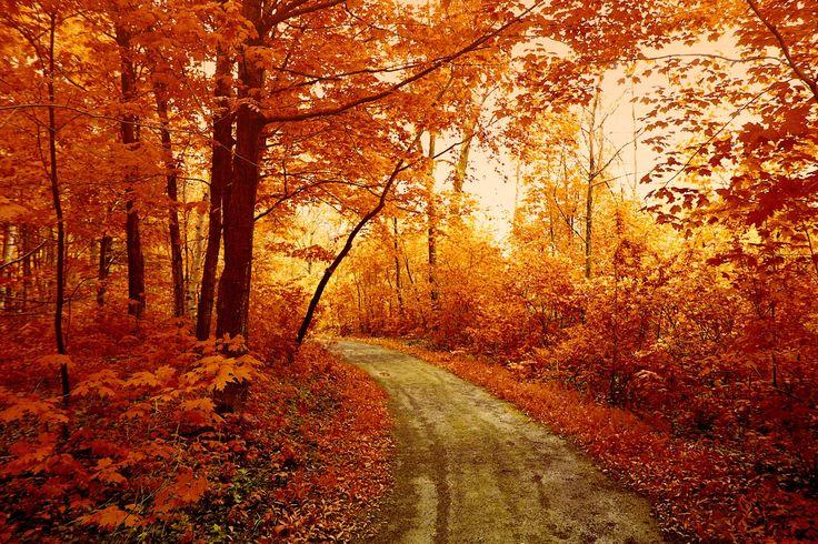 ¡Ya ha llegado el otoño! Feliz equinoccio! www.xtremonline.com