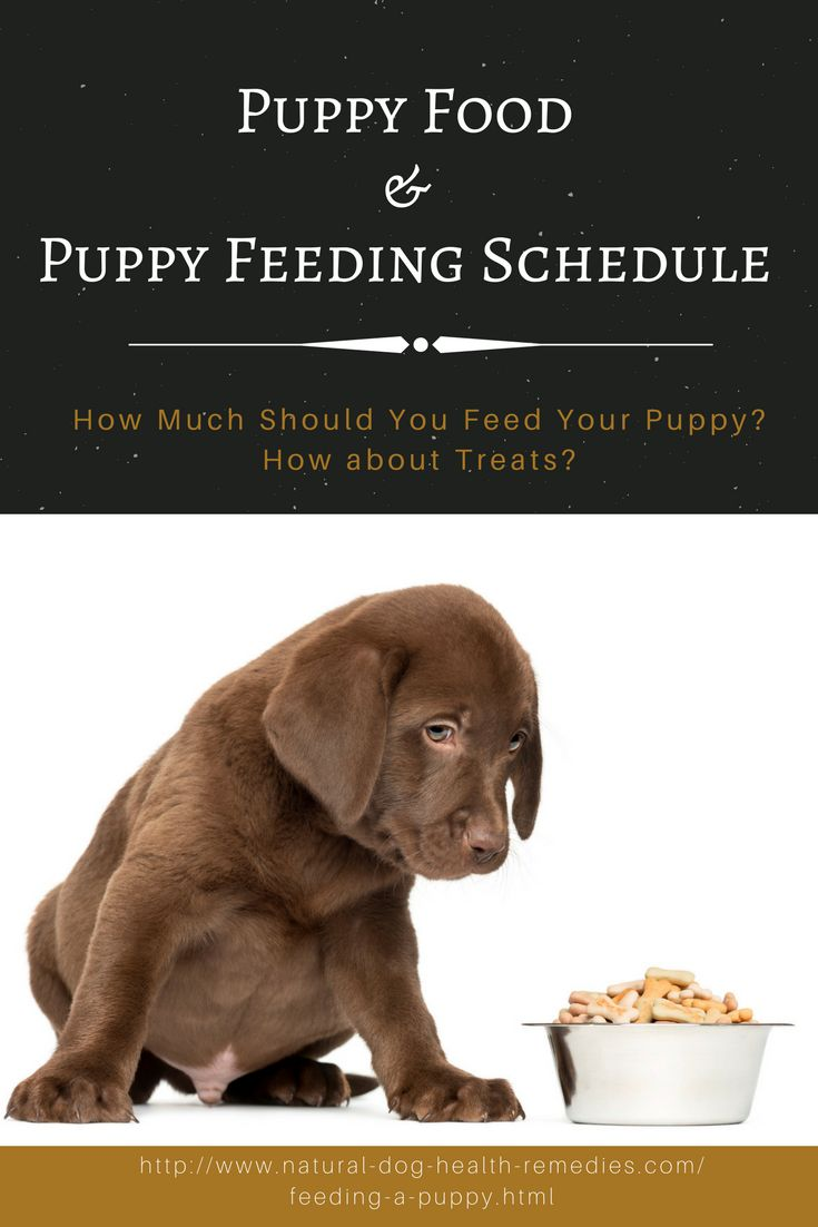Got a new puppy? Trying to find out what, how much, and how often you have to feed your puppy?  Visit this page...