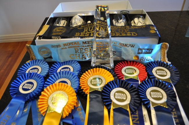 royalshowtrophies15.jpg (650×432)