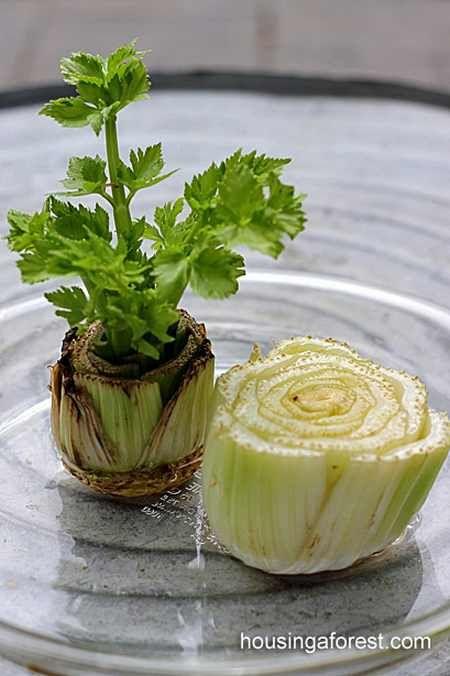 10 ortaggi da comprare una sola volta e coltivare per sempre