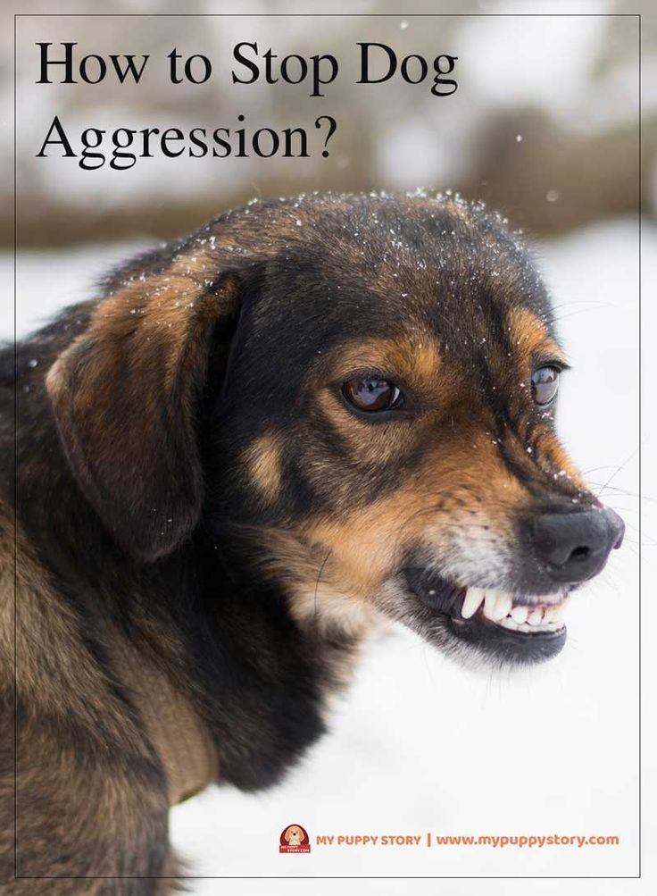 the 25 best dog aggression training ideas on pinterest With dog training for aggressive dogs