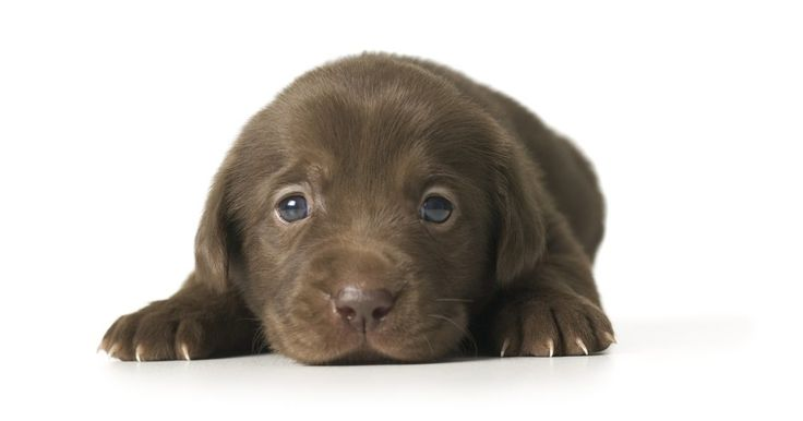 Tratamento caseiro para atopia canina. A atopia canina, também conhecida como dermatite atópica canina, é uma alergia de cães sensíveis a alérgenos ambientais, tais como pólen, esporos e poeira. De acordo com a Rede de Informações Veterinárias, a doença é hereditária. Até cerca de 15% dos cães possuem essa doença, que aparece geralmente quando o cão está com um a três anos de idade. Os ...