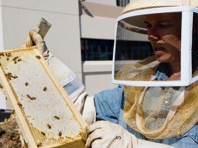 A Quick Guide to Starting a  Beehive. I may have to get into this...