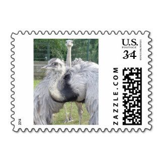 Ostriches, Animal stamps Postage http://www.zazzle.com/ostriches_animal_stamps_postage-172286711878114808