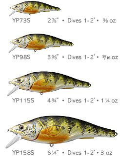 how to catch yellow perch in summer