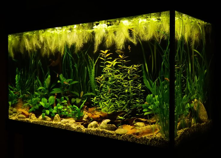 Low Tech Tank Show-and-Tell (low tech can be lush, too! =) - Page 47