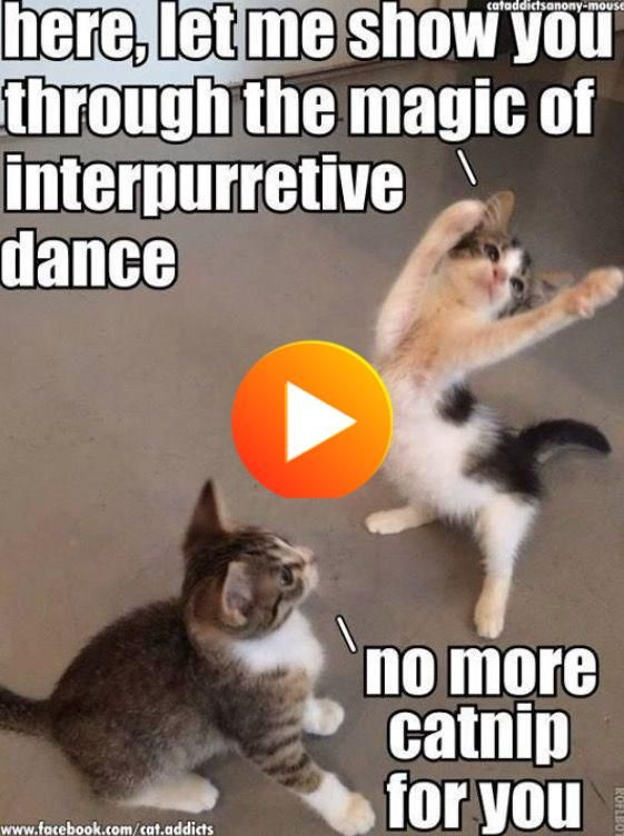 17 Cats That Might Have Had Too Much Catnip In 2020 Cat Memes Catnip Crazy Cats