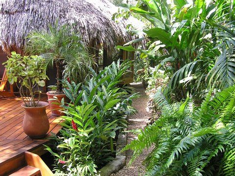 Tropical Garden Ideas Uk 20 best tropical looking uk garden plants images on pinterest