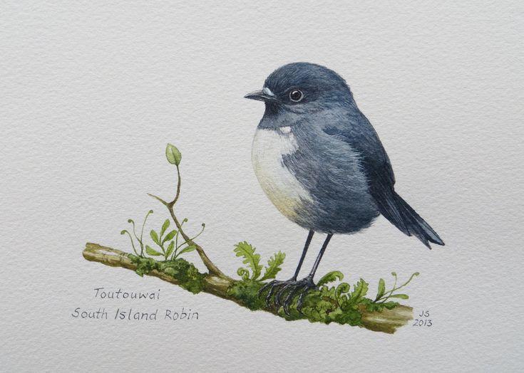 Toutouwai-South Island Robin  Watercolour  300x200mm