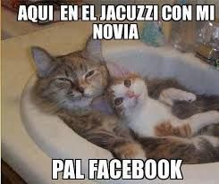 Resultado de imagen para gatos graciosos