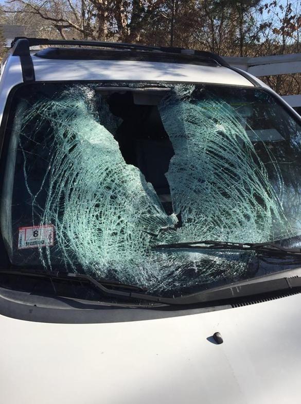 Turkey Crashes Through Driver S Windshield On Cape Cod Road The Boston Globe Windshield Cape Cod Car Windshield