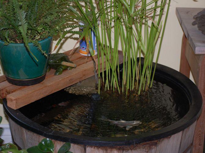 Ponds Indoor : ... Indoor Pond on Pinterest  Indoor, Backyards and Indoor Water