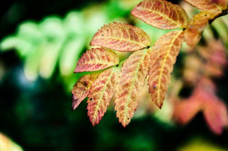 https://flic.kr/p/DjaB7E | Autumn | Autumns